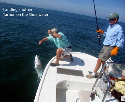 Huge Tarpon on the Shoalwater